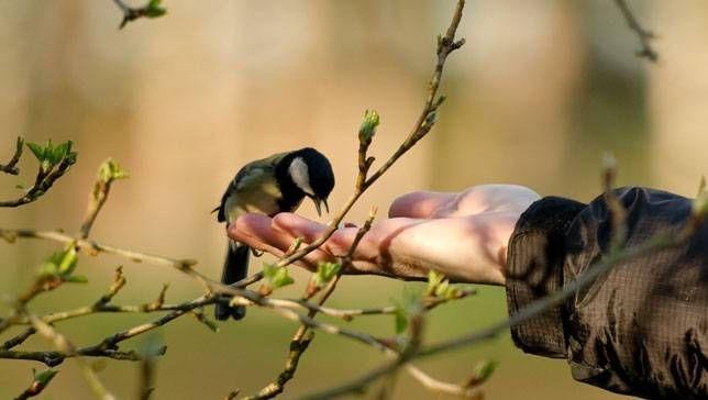 Bird hunting: A bird in the hand